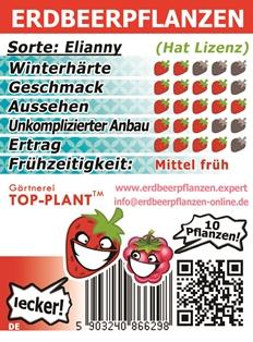 Erdbeersorte