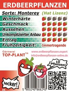 Erdbeerpflanzen Immertragende