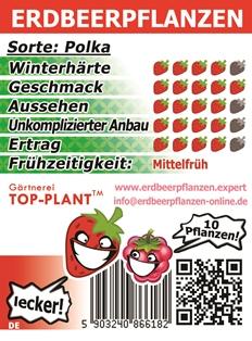 Erdbeerpflanzen Polka