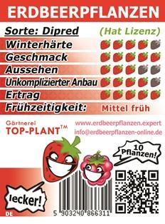 Beste Erdbeersorte