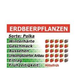 Erdbeeren Polka 10 Stück